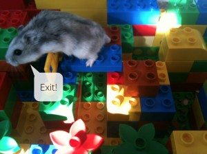The hamster pops out the top of the maze and stops playing.